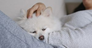Cute dog comfy and warm indoors